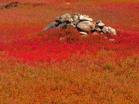 Rock Pile in Blueberry Field